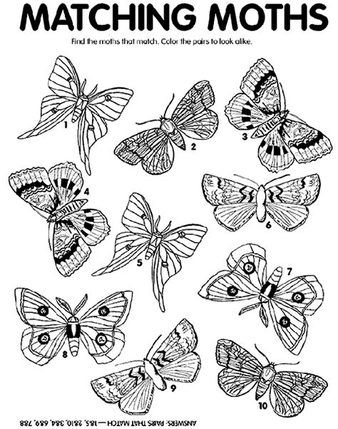 Moth Match Coloring Page Crayola Com The Match Free Printable Coloring Pages