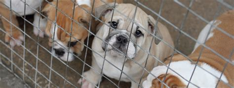 smuggling puppies join our fight against puppy smuggling dogs trust