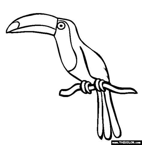 printable animal line drawings picture of toucan to color toucan coloring page free