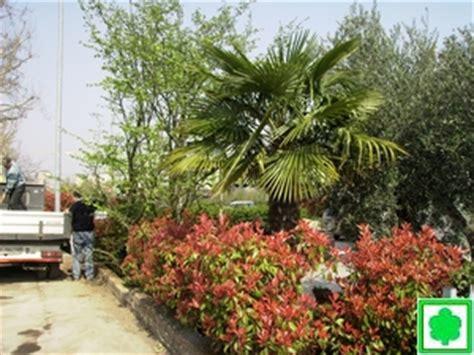 siepi da giardino costi potature piante alto fusto e siepi