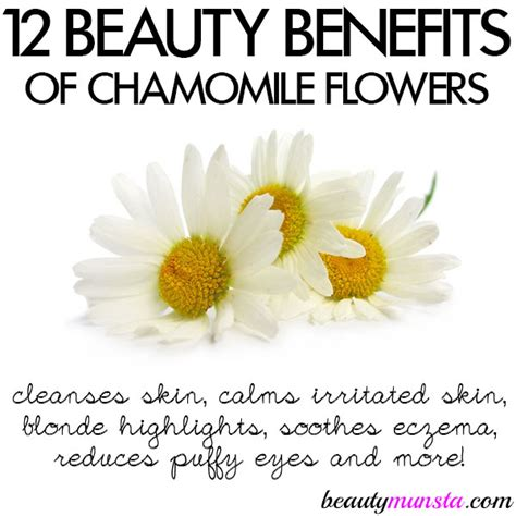 top 3 benefits of having long hair 12 beauty benefits of chamomile flowers for skin hair