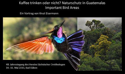 gua de aves 8428215332 aviturismo en guatemala