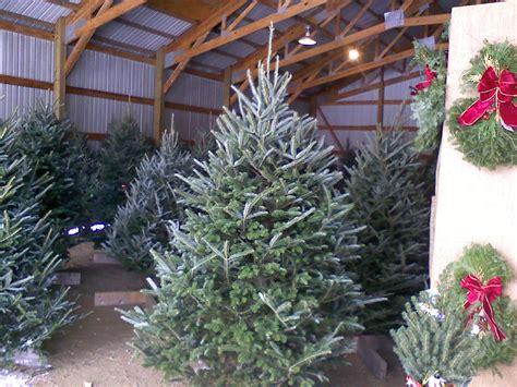 christmas trees arbor hill tree farm