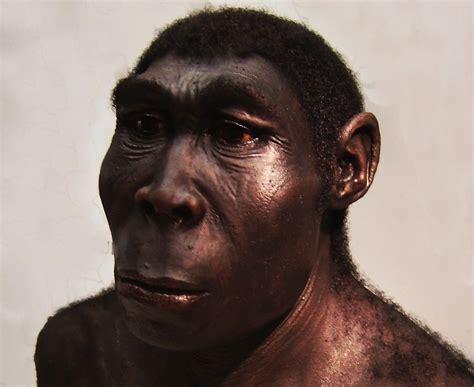 homo erectus facts about homo erectus