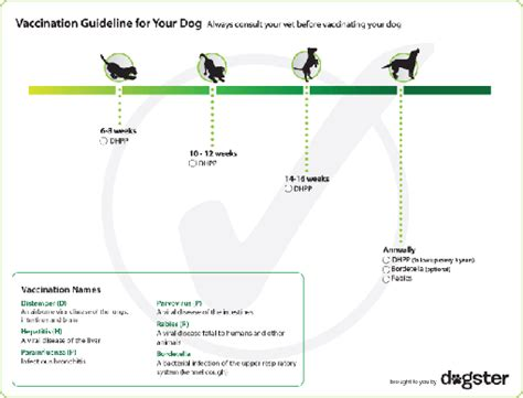 puppy vaccination schedule vaccination schedule animals pets