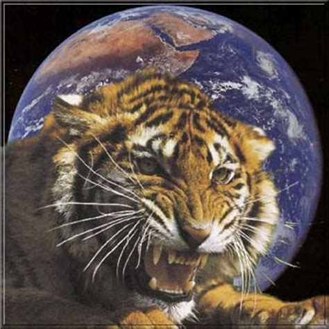 related keywords suggestions for earth tiger