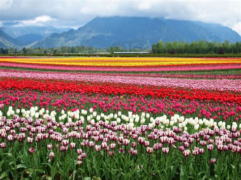 what to do in vancouver this spring for free or almost