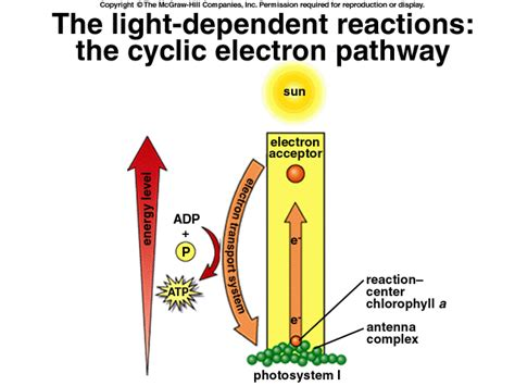 What Provides Electrons For The Light Reactions by 4 Gb1 Learnres Web Ch07