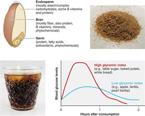 whole grains contain quizlet diet chart for high uric acid patient pdf for increased