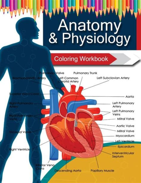 anatomy coloring book barnes and noble anatomy physiology coloring workbook books by dr