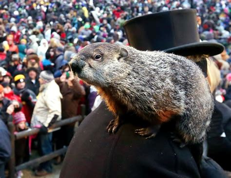 groundhog day facts groundhog day facts 28 images facts for about