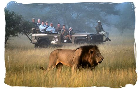 Afika Syari Black a typical day on an wildlife safari
