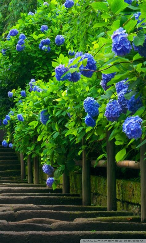 japanese garden stairs  hd desktop wallpaper