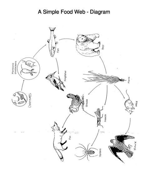 A Simple Food Web - Diagram | Simple food web, Food web