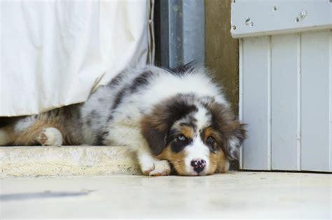 cuscini per cani dalani cuscini per cani grandi comfort per la cuccia