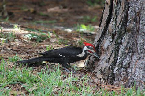 backyard birder backyard bird identification sparrows and finches 2017
