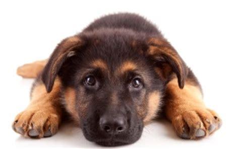 Rug by Waarom Gaat Mijn Hond Liggen Als Er Andere Honden Aankomen