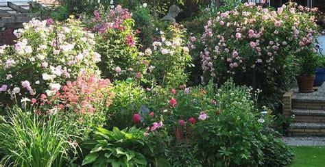 mediterrane pflanzen im garten und auf der terrasse