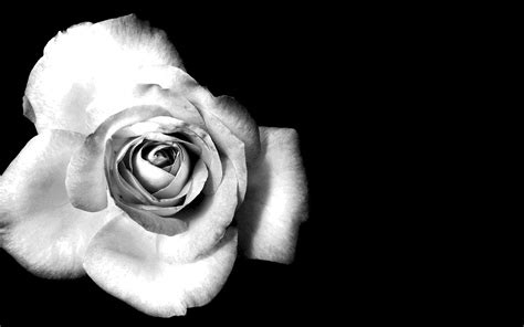 black white black and white flower background tumblr clipartsgram com
