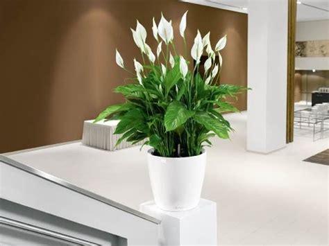 plantas florales de interior plantas de interior bonitas y f 225 ciles de cuidar