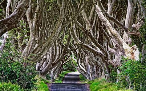 Batu Gambar Pohon Kembar 20 gambar pepohonan cantik menjalin dan membentuk lorong