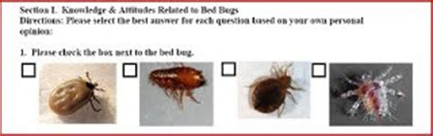 do bed bugs bite everyone bed bug bite survey does everyone react to bed bug bites