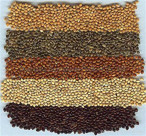 millet korea s ancient grain gwangju blog