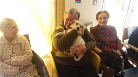 casa di riposo chio una casa di riposo accoglie un cucciolo per aiutare i