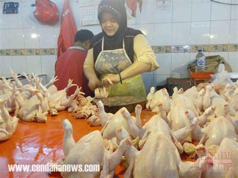 Bibit Ayam Potong Di Bali harga daging ayam potong dan ikan di ternate melonjak