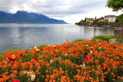 Geneva Flowers 2 landscape with flowers and lake geneva montreux