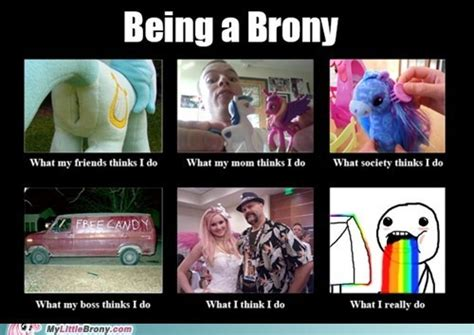Brony Meme - 608 best images about my little pony on pinterest doctor