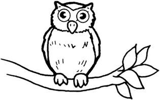 pictures of owls to color owl coloring pages coloring ville