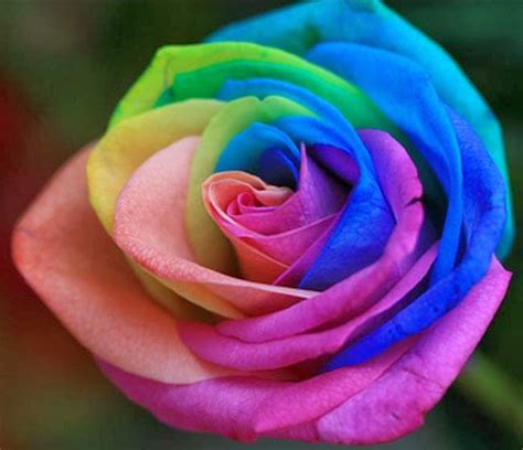 rainbow colored roses as children many colored white carnations by