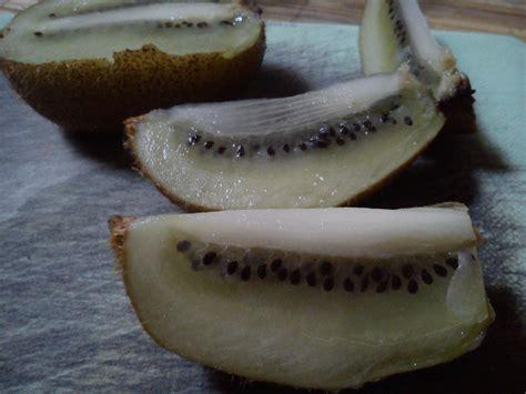 Beli Bibit Buah Kiwi kiwi fruit from seed official chitra