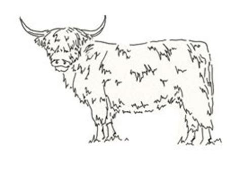 highland cow coloring page highlands images colouring pages