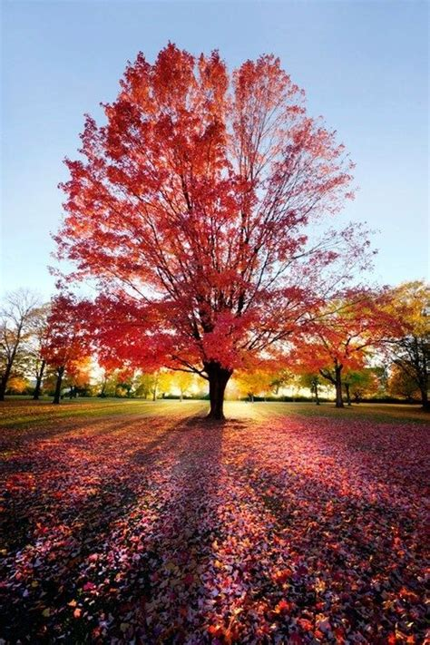 pretty trees beautiful trees and flowers pictures autumn colors