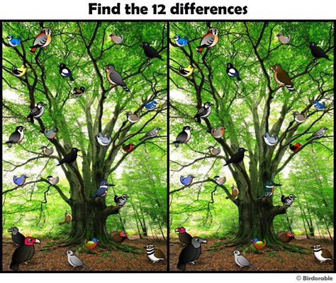 Find Picture Of Find The Difference Pics Search Engine At Search
