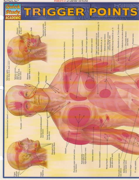 Pdf Trigger Points Quickstudy Inc Barcharts by Galleon Trigger Points Study Academic
