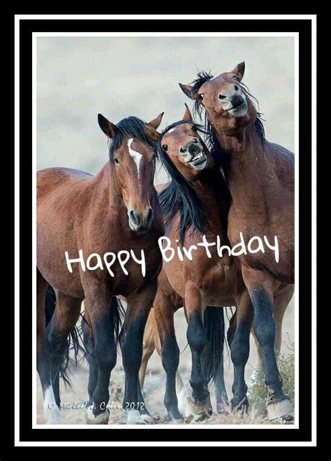 Horse Birthday Meme - horses happy birthday for others pinterest birthday
