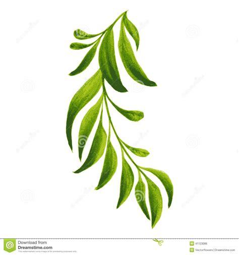 imagenes de hojas verdes solas branche d 233 corative d ornement avec les feuilles vertes