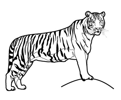 tiger template 70 animal colouring pages free print free