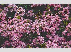 nv68-flower-pink-spring-happy-nature-wallpaper Ipad Air 2019