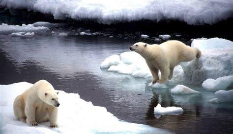 cuc tras de animales del 8467561947 impactos del cambio clim 225 tico en los animales