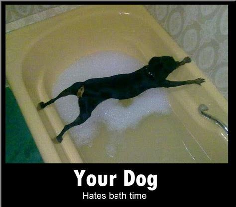 Bath Meme - fast at forty diesel the dog bath time sucks