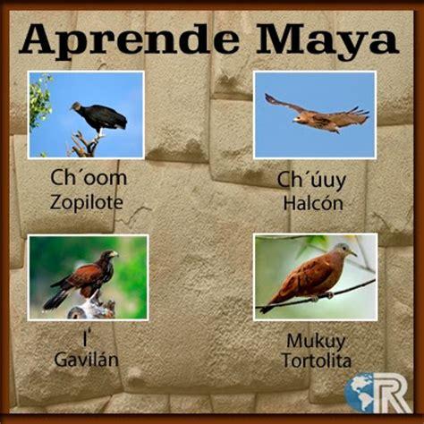 amaca pronuncia aprende