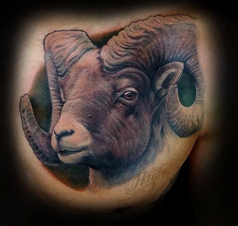 lucky bamboo tattoo realistic big horn sheep chest by haylo tattoos