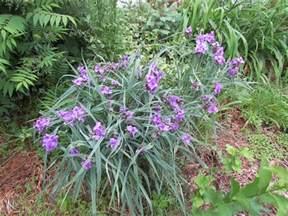 Identify Garden Flowers Identify These Purple Flowers Ask An Expert