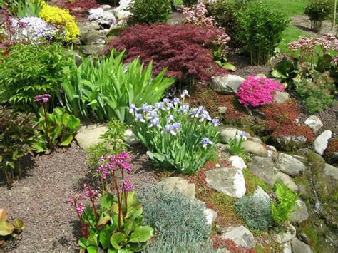 steingarten ideen garden with small shrubs and plants rock garden