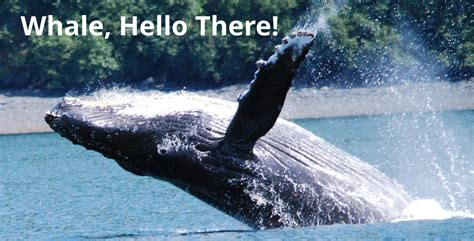 docker whale tutorial hello whale images vs containers in docker codefresh