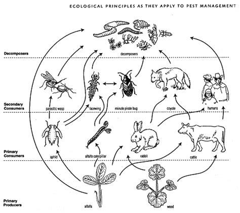 9 best images of food web diagram worksheet food web